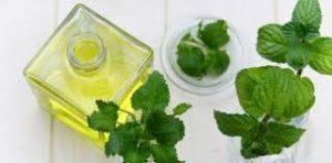 Aceite esencial de bergamota: beneficios y usos del oro verde de Calabria