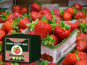 Home Berry Box conjunto de cultivo de fresa, cómo usarlo, como funciona