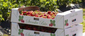 Home Berry Box donde comprar, tienda